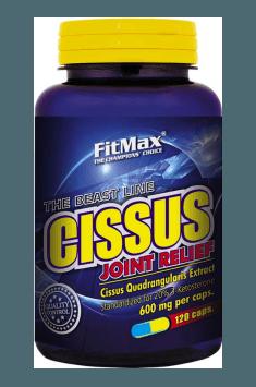 Cissus